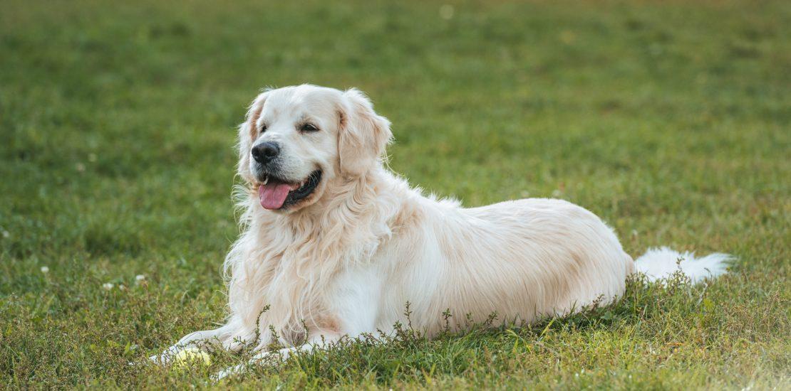 anti puce et tique chien
