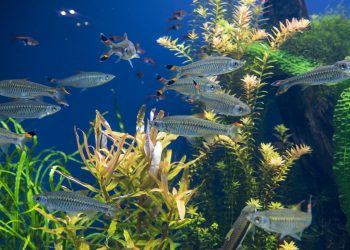 entretenir son aquarium à Nice
