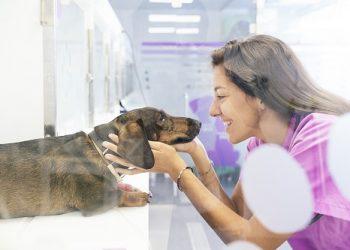 Dog 'Story : votre éducateur canin en Haute-Loire